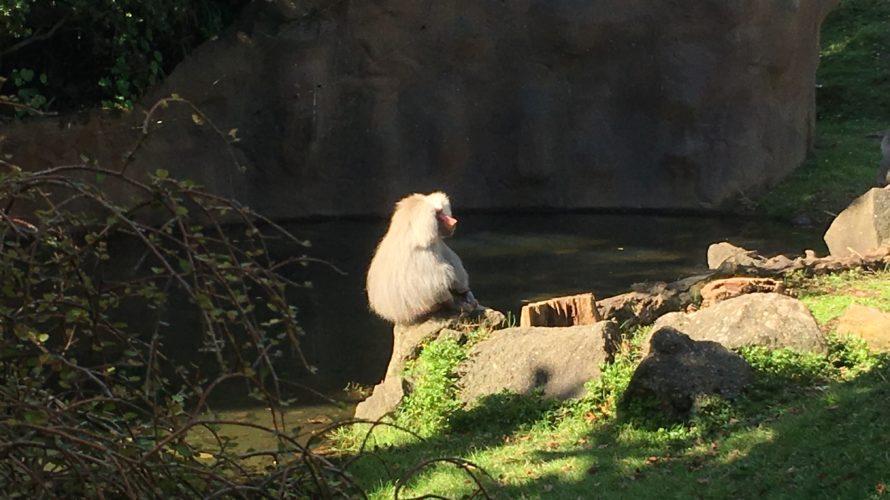 オークランド動物園に行ってきたゾウ